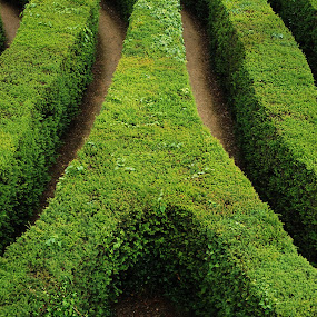 Spiral maze by Aaron Nappin - Abstract Patterns ( curve, abstract, hedge, in a row, green, striped, spiral, leaf, s-shape, maze, concave, convex )