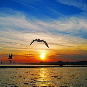 SERENITY by Nihan Bayındır - Landscapes Sunsets & Sunrises ( clouds, freedom, sunset, image, sea, view, landscape, sun )