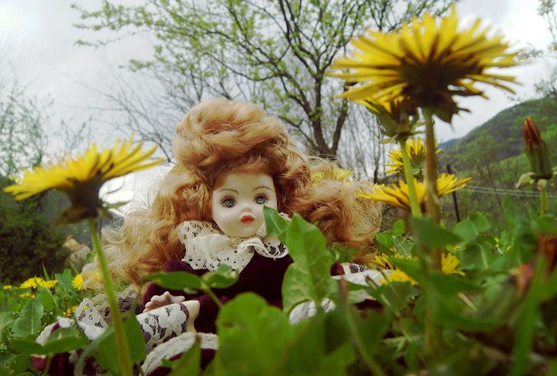 Tra i fiori di danilo56