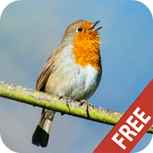 Singing Birds ringtone