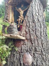 Photo: Carved in tree stump near Wetterstein Hut.