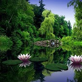 1080p Nature Wallpapers