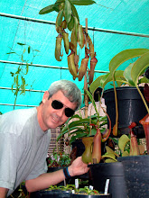 Photo: Robert Cantley with Nepenthes. Foto: Diana Williams.