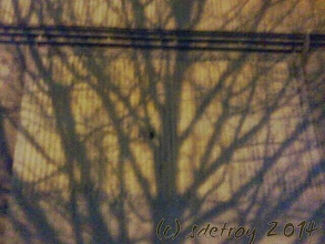 Photo: After my aerial yoga class I take Ripsi for a walk and see tree shadows on a winter's night. The shadows are created by street lights.