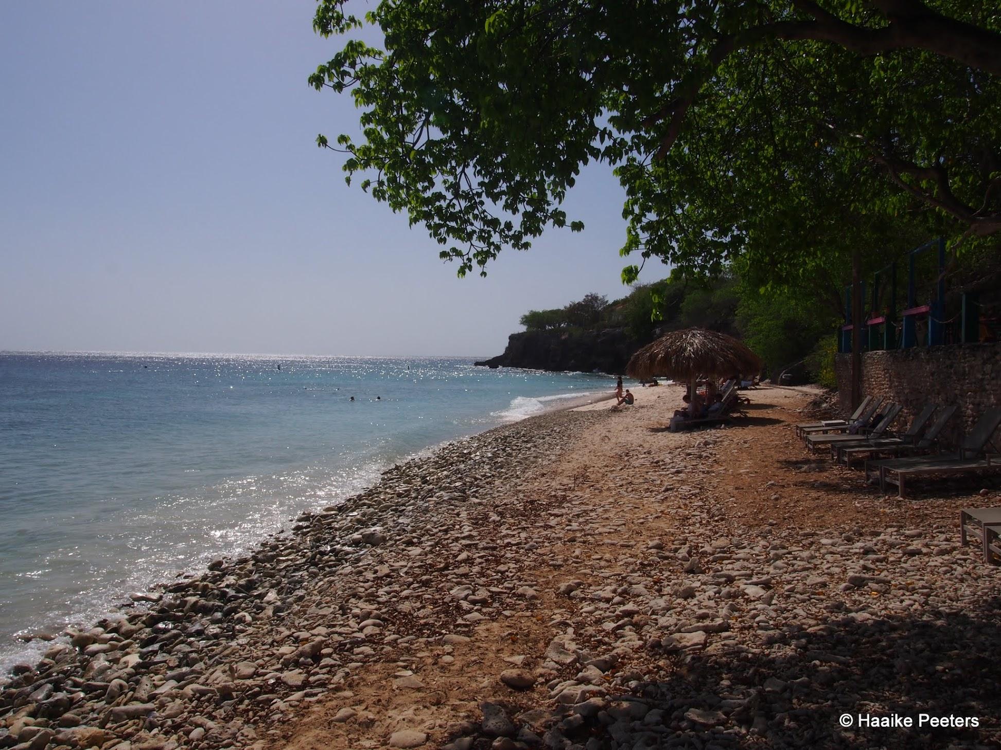 Playa Kalki Curaçao (Le petit requin)
