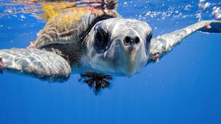 imagen de una tortuga marina