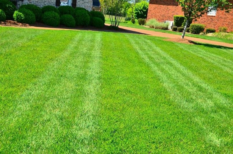 Założenie trawnika z siewu - porównanie cen produktów