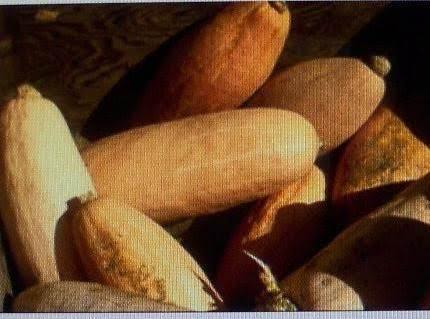 Banana Squash