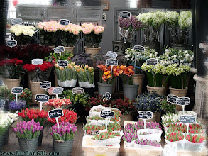 Photo: amsterdam, flower, holland, market, netherlands, travel