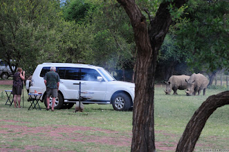 Photo: White Rhino grazing in the Bontle Camping Site, Marakele national Park, South Africa.