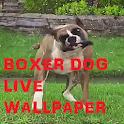 Boxer Dog Animated Wallpaper icon