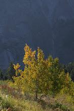 Photo: Aspen and granite