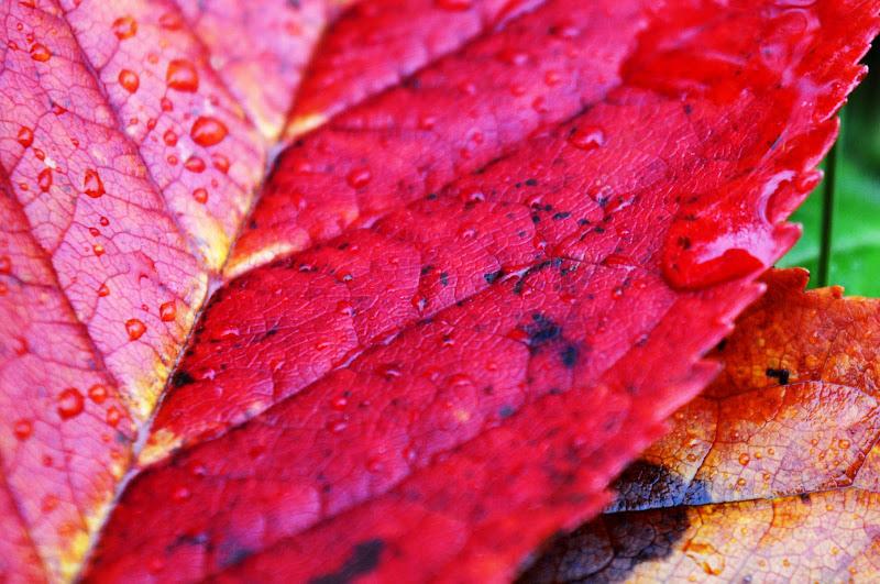 i colori delle foglie di valen85