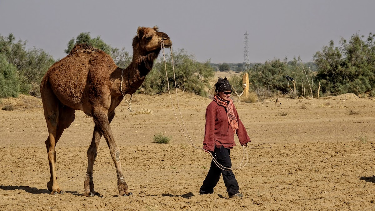 Thar. Desert Camel Trekking Day 3. Patricia leading Papoo for saddling