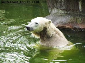 Photo: Knut schaut sich um ;-)