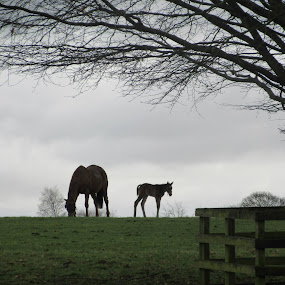 mare and foal by Catarina Cardoso - Animals Horses