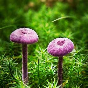 by Metka Hiti - Nature Up Close Mushrooms & Fungi