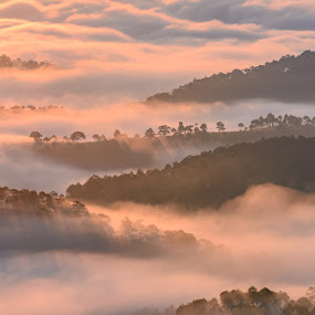 Good morning by Gia Đình Nhà Khoai - Landscapes Mountains & Hills ( foggy, pine tree, ray of light, forest, sunrise, sunlight,  )