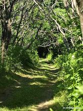 Photo: Trail at Burton Island State Park by Matt Parsons