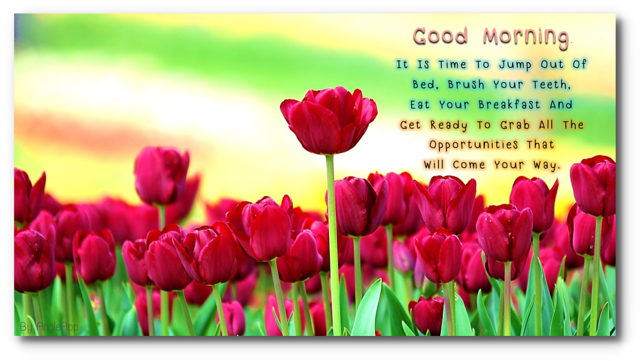 Good Morning Beautiful Your Night Download : Good morning night beautiful flower wishes android