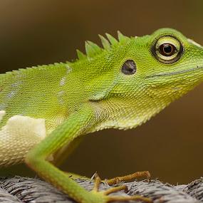 by Cikgu Al - Animals Reptiles