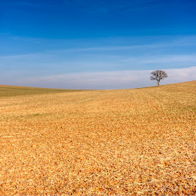 Lonely by Dietmar Pohlmann - Landscapes Prairies, Meadows & Fields ( field, nature, tree, horizon, perspective, landscape )