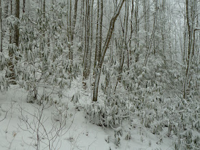 Photo: Then it snowed some more.