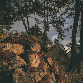 R&F by Paul Voie - Nature Up Close Rock & Stone ( red flowers, rocks, winter, perspective, trees )