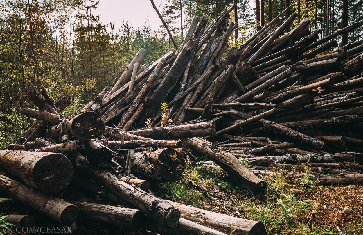 Брошенный лес на Танковом полигоне
