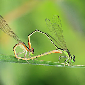 Share their love by I Wayan Gunayasa - Animals Insects & Spiders