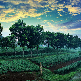 Sejuknya Pagi the cool morning by Hasby Photography - Landscapes Sunsets & Sunrises ( landscape photography, landscape )