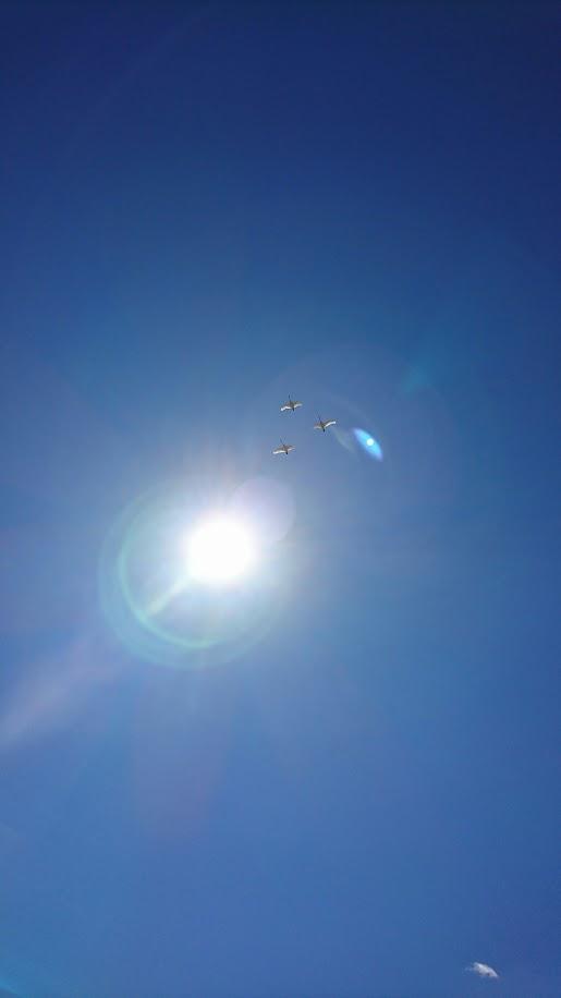 真っ青な 空を飛ぶ白鳥