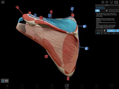 human anatomy atlas 2018 apk free