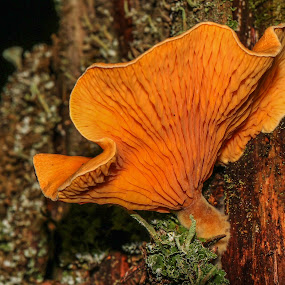 wheeler shroom 1 by Bob Minnie - Nature Up Close Mushrooms & Fungi