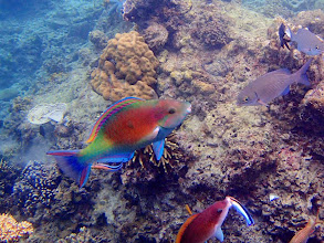 Photo: Cleaning Station, Miniloc Island Resort reef, Palawan, Philippines