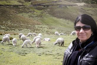 Photo: Paula sees the beauty of alpacas living on a vivid landscape.