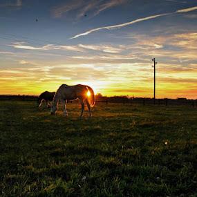 by Nataša Kos - Animals Horses