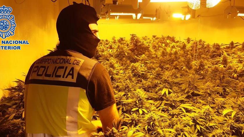 Un agente de la Policía Nacional, en la plantación.