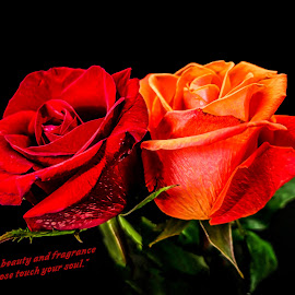 Touching Your Soul by Dave Walters - Typography Quotes & Sentences ( typography, macro, nature, lumix fz2500, roses, colors )