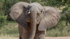 Suspected poacher 'trampled to death by elephant' in Kruger National Park - SowetanLIVE
