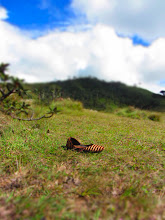 Photo: Lone shoe in Horton's Plains.