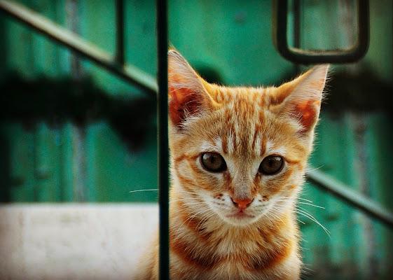 Diagonali feline di Obscurenotion
