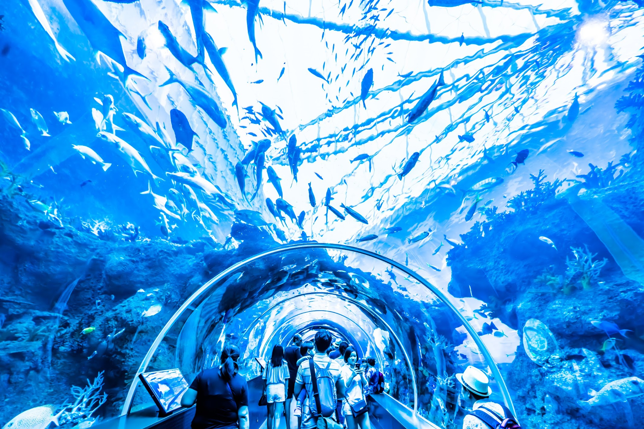 Singapore Sentosa S.E.A. Aquarium Shark3