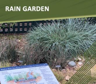 Apply for a Rain Garden rebate