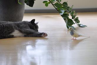 Photo: Kass Liisu ei usu oma silmi ning hakkas imelikku häält tegema. Läksin ja kiikasin neid, et mis teoksil ja ei usukunud minagi oma silmi...