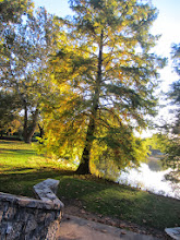 Photo: Looking at the golden setting light on a tree from a stone bridge at Eastwood Park in Dayton, Ohio.