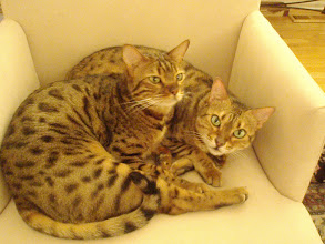 Photo: ...cuddled together...