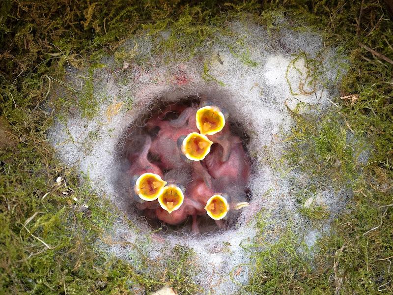 La nascita di alagnol