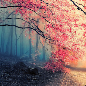 The pink forest by Abbas Mohammed - Landscapes Forests ( nikon, new, sony, hdr, trees, new york )