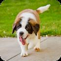 Saint Bernard Dog Wallpaper icon
